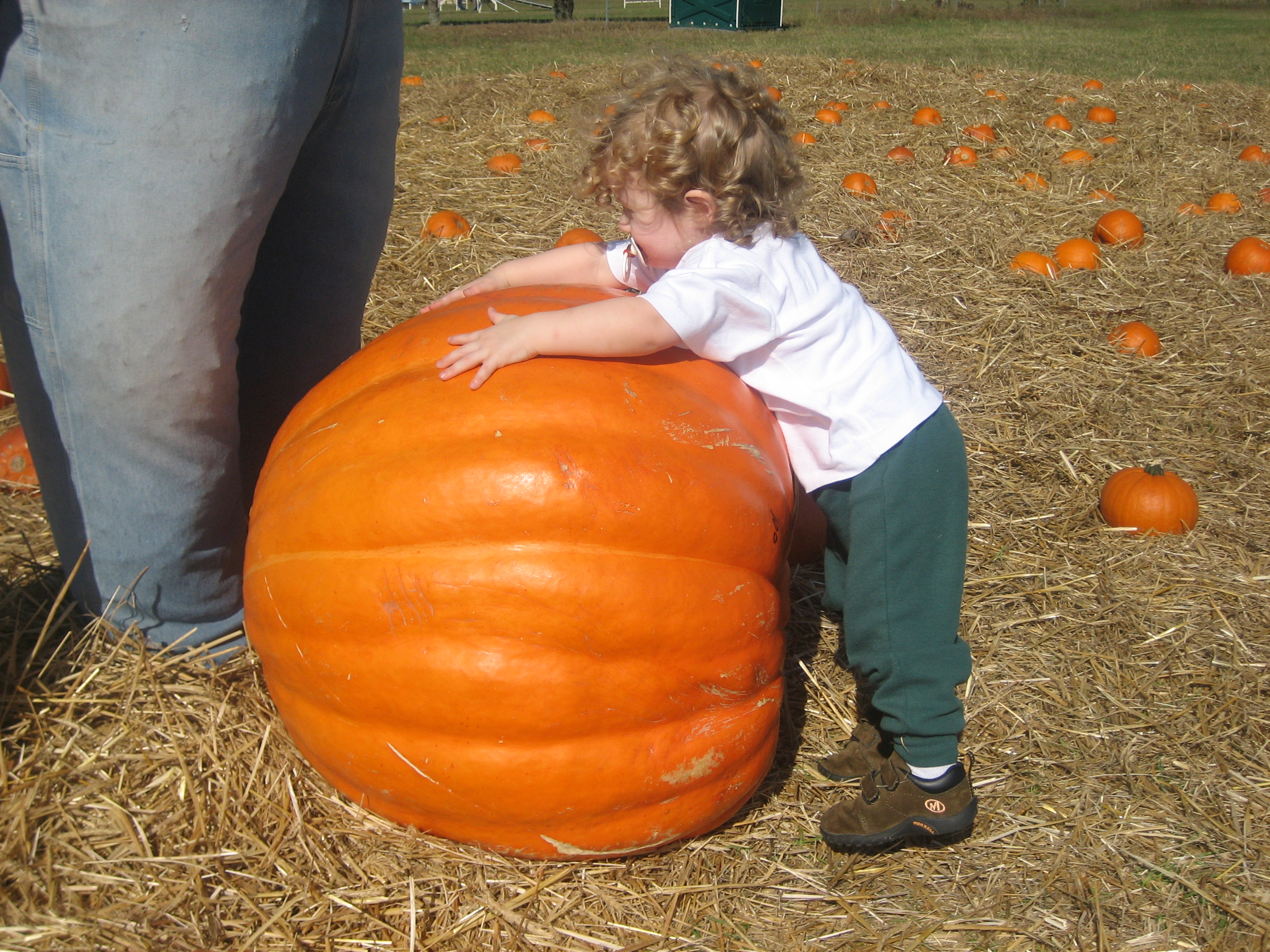Top Picks for Pumpkin Patches & Corn Mazes