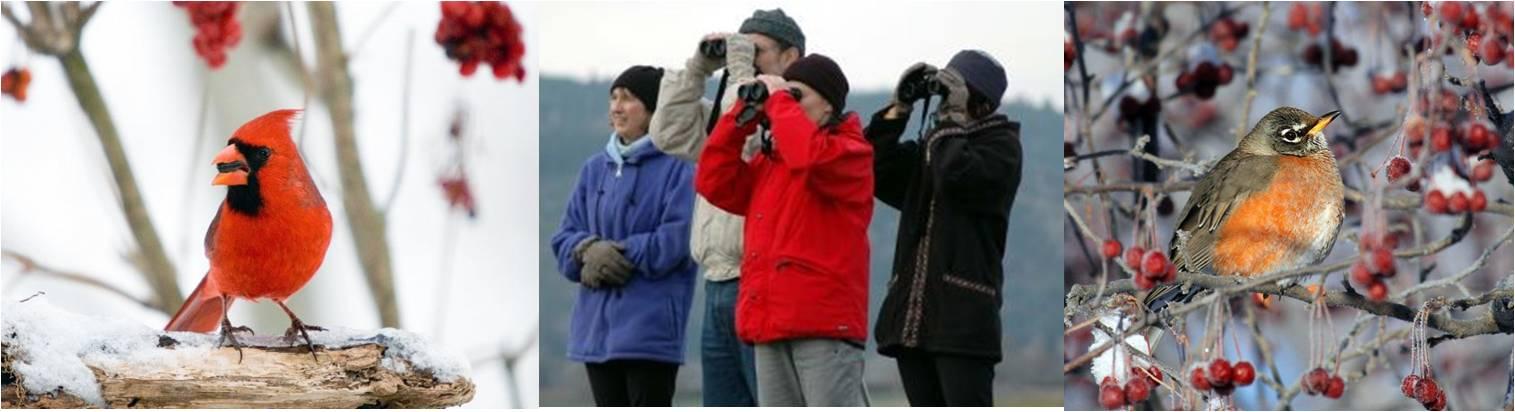 Calling all birders! Christmas Bird Count Program