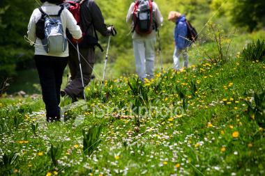 Spring Wildflower Walk @ Callaway Gardens