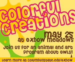 Oxbow Colorful Creations_Owls