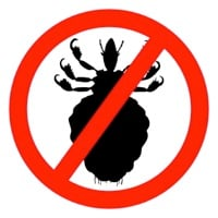 Head lice prevention tips muscogee moms for Can head lice transfer in swimming pools
