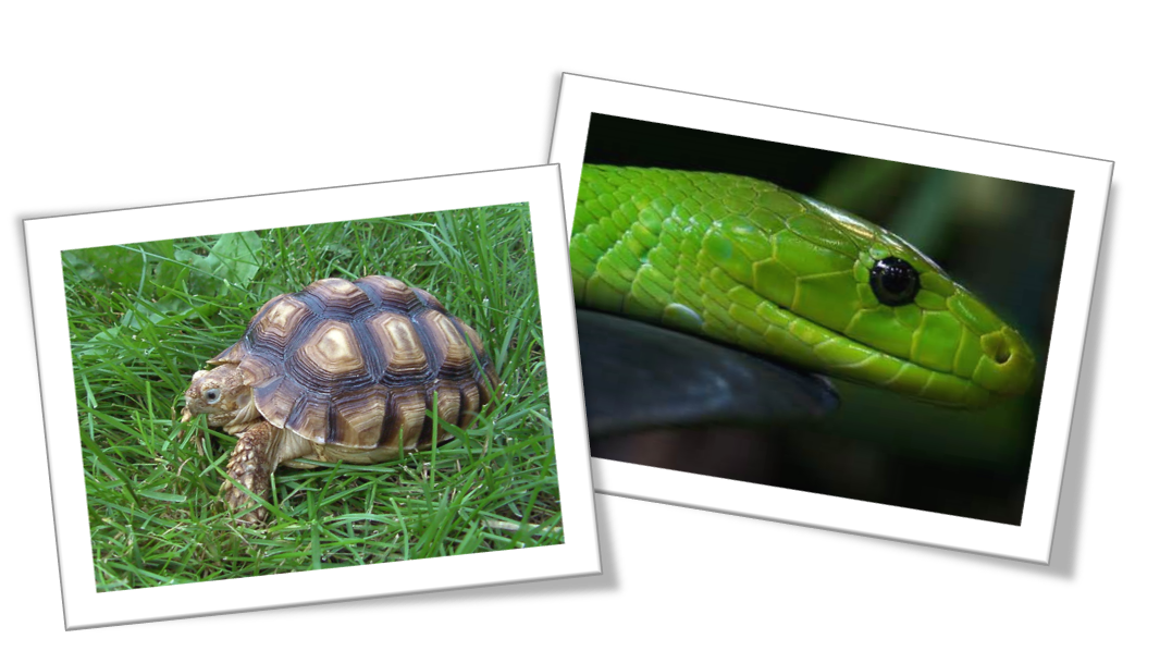 Remarkable Reptiles at FDR State Park (Pine Mountain, GA)