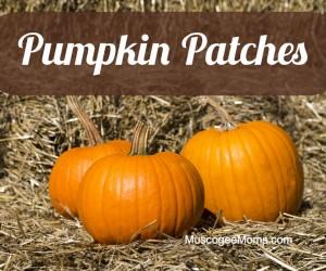 MMoms Pumpkin Patches