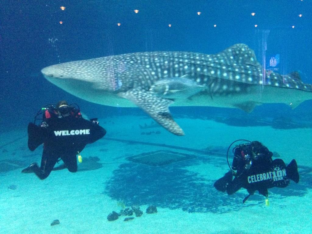 GA Aquarium 10th anniversary