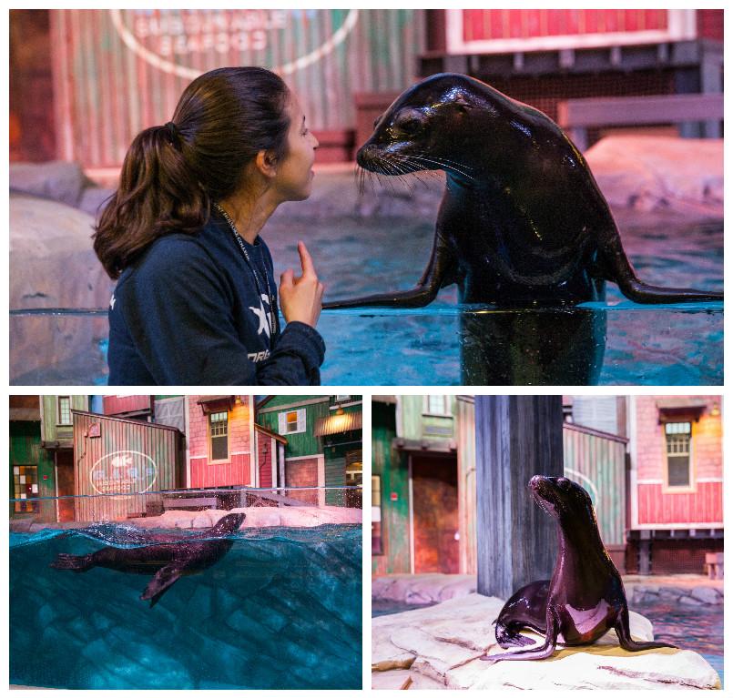 sea lions premier