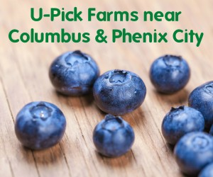 U-pick-farms-300×250