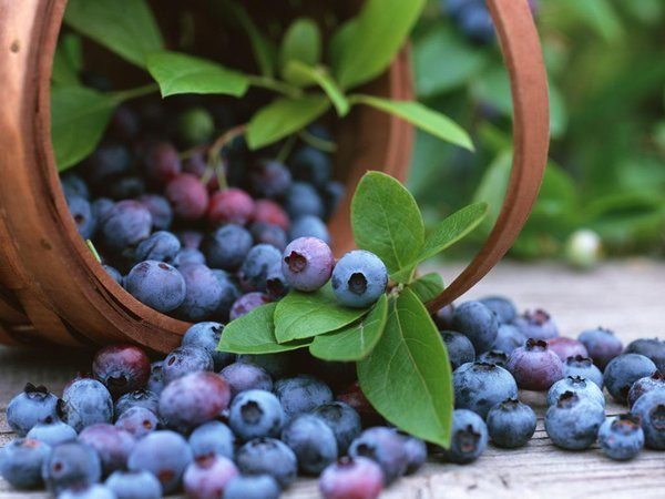 Alabama Blueberries