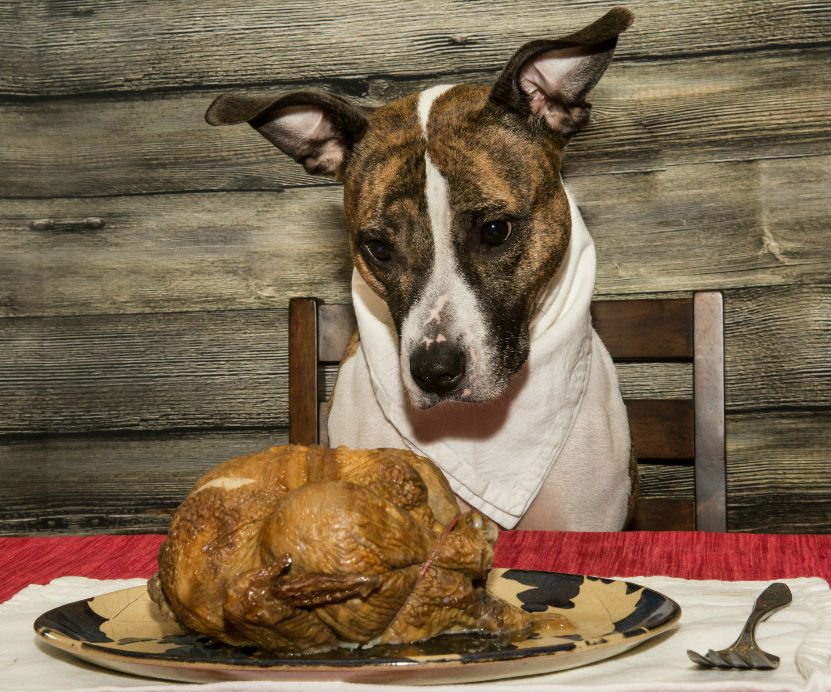 Thanksgiving Pet Safety Guide