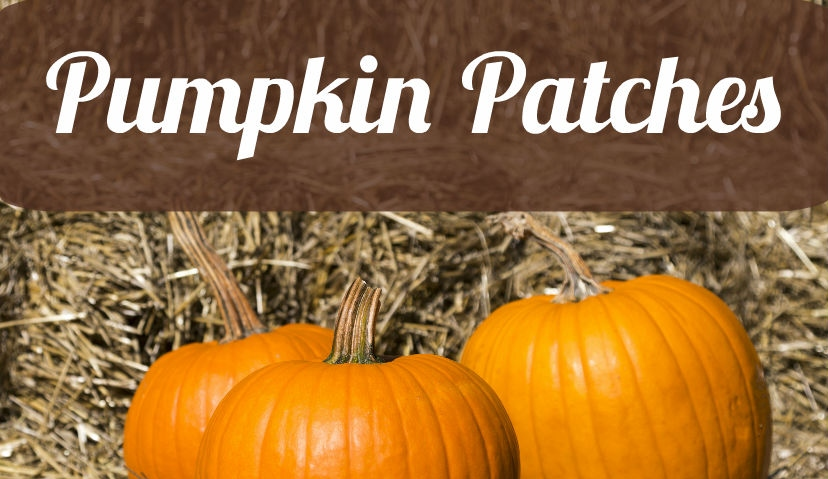 MMoms-Pumpkin-Patches-16×9