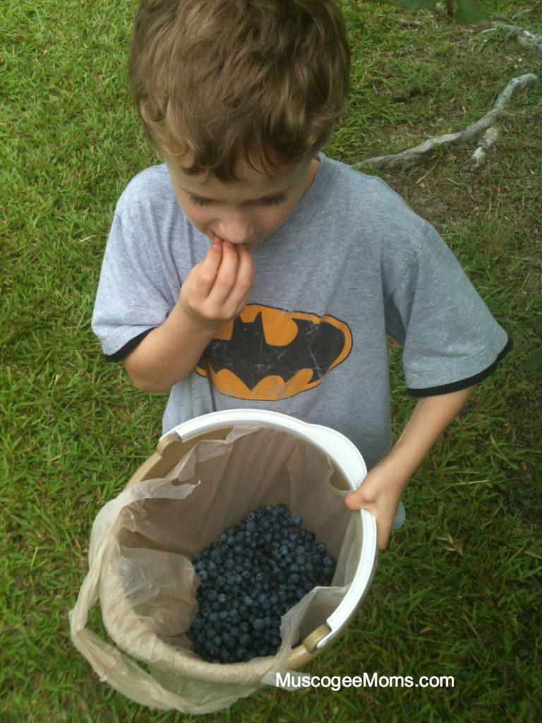 little blueberry helper