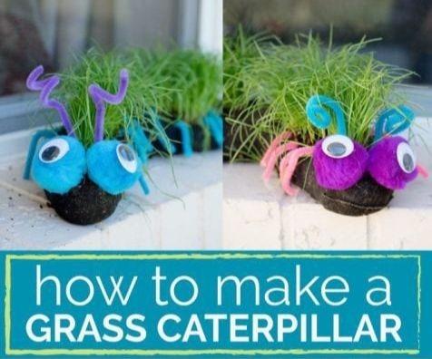 Garden Grass Caterpillar